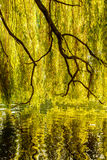 Tree reflection on the water Royalty Free Stock Images