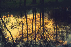 Tree reflection in the water Royalty Free Stock Photos