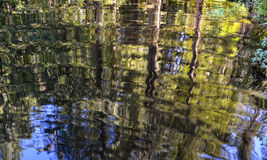 Tree Reflections. Reflection of trees on Lewis Lake, British Columbia Royalty Free Stock Photography