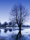 Tree reflections. Spring: trees reflection in water at the park; blue color Stock Photography