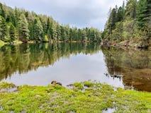 Tree reflections stock photos