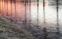 Tree reflections in freezing water Royalty Free Stock Photo
