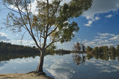 Tree and reflections by the Lake Stock Images