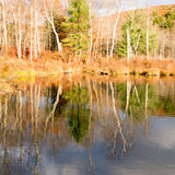 Tree reflections on pond and Fall color Royalty Free Stock Photos