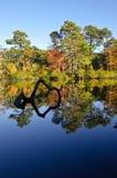 Autumn tree reflections Stock Photos
