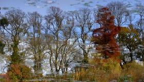 Tree reflections Royalty Free Stock Photo