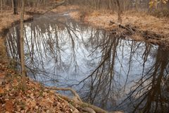 Refections on a small creek in Pennsylvania, USA Royalty Free Stock Images