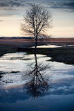 Tree relection in water Stock Photos