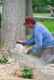 Tree Removal Stock Image