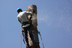 Tree Removal Jobs. Cutting down a large tree. Tree removal occupations. Tree trimming jobs Stock Image