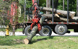 Tree Removal Stock Images