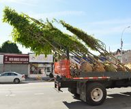 Tree Removal Service Towing Away Damaged Trees on Truck Vehicle stock images