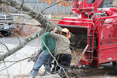 Tree removal and worker moving tree trunk to grinding machine stock images