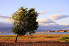 Tree by reservoir. Single tree in front of Guanting reservoir Royalty Free Stock Image