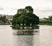 Tree in a reservoir Royalty Free Stock Images