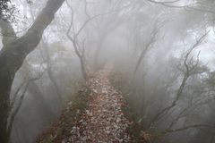 Ridgeline, fog. Tree and ridgeline, fog and tree, mountain Royalty Free Stock Image