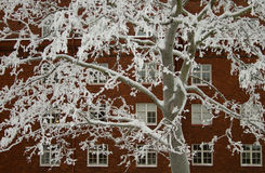 Tree with rime stock photo
