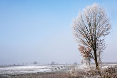 Tree with rime on the bare branches at a wide snowy field, white stock photography