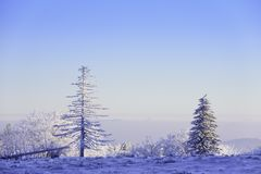 Tree with rime in the cold morning on the mountain in Winter royalty free stock images