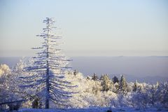 Tree with rime in the cold morning in Winter stock photo