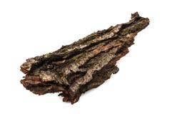 Tree rind Stock Photography