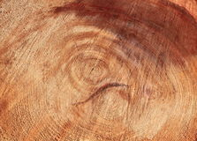 Tree Ring Royalty Free Stock Photos