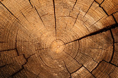 Tree Ring. Cross cut of wood with tree rings Royalty Free Stock Photos