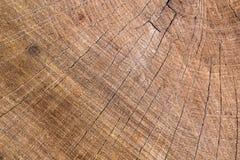 Tree ring background. Old wood Stock Image