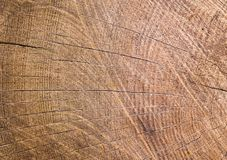 Tree ring background. Old wood Royalty Free Stock Photo