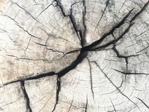 Tree ring. And crack of cut  transversely wood texture. Cross section of wooden background Stock Photo
