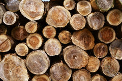 Tree ring of felling wood. The Tree ring of in a forest Royalty Free Stock Image