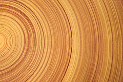 Tree ring. log. wood. Stock Images