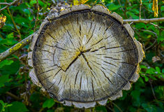 Tree Ring, Log, Wood. Stock Photo