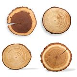 Tree Ring. Log Wood Tree Trunk Tree Pine Timber Stock Photos