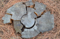 Tree ring puzzle pieces. Old wooden tree ring broken and fitted like jigsaw puzzle Royalty Free Stock Photography