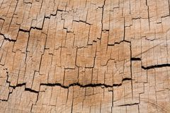 Tree ring texture. Tree rings in a closeup cross-section of a tree trunk Royalty Free Stock Photography