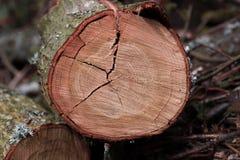 Tree ring. Log photo jonphelan Stock Photography