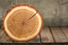 Tree ring. Log wood tree trunk tree pine timber Royalty Free Stock Photography