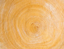 TREE RING. YELLOW COLOR OF TREE RING BACKGROUND Stock Images