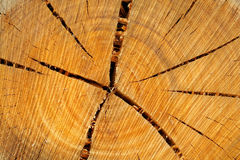 Tree rings Royalty Free Stock Images