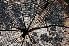 Tree-rings Stock Photos