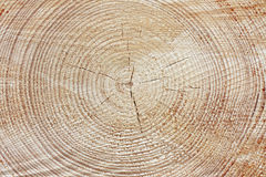 Tree rings Royalty Free Stock Photography