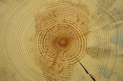 Tree rings Stock Photos