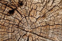 Tree rings. Wooden cut texture and background Royalty Free Stock Photos
