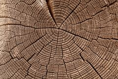Tree Rings. Wooden cut texture and background Royalty Free Stock Image
