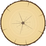 Tree rings. Cross section of tree trunk showing growth rings stock illustration