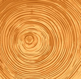 Tree Rings. End grain showing annual tree rings Royalty Free Stock Image