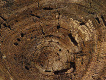 Tree Rings. Looking down on tree stump stock photography