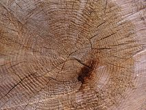 Tree rings. Wood texture: tree rings Royalty Free Stock Photo