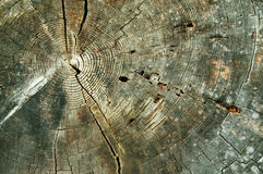 Tree Rings Abstract Background. Abstract background of close up of concentric tree rings of weathered cross section of estimated 730 year old Douglas fir ( Stock Photos